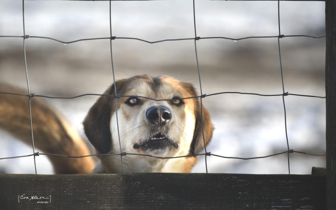 Augusztus 16 – Hontalan Állatok világnapja